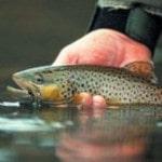 Ловити рибу руками