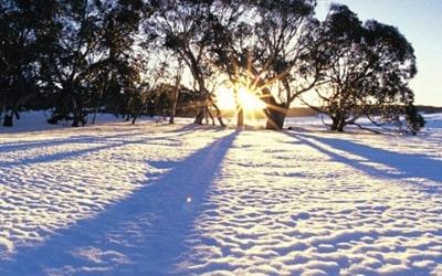 Сонник сніг